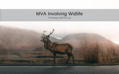 Motor Vehicle Accidents Involving Wildlife